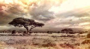 Savannah - Africa